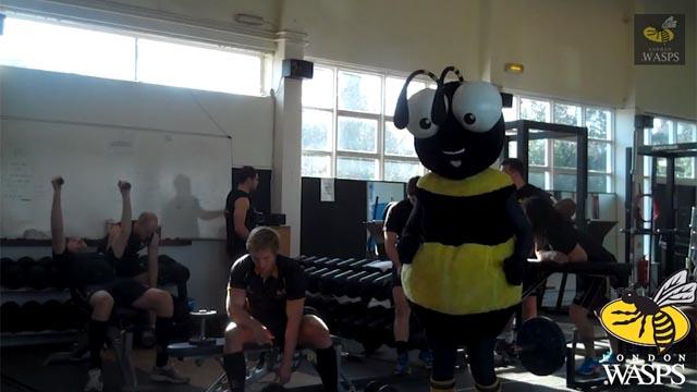 The Wasps Harlem Shake