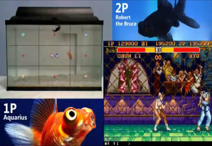 Fish Street Fighter 2