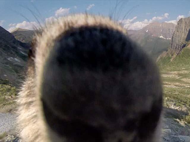 Marmot Glacier National Park
