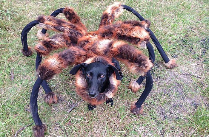 Spider dog prank