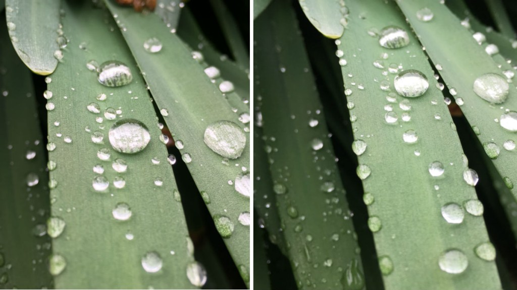 iphone 6 vs iphone SE camera