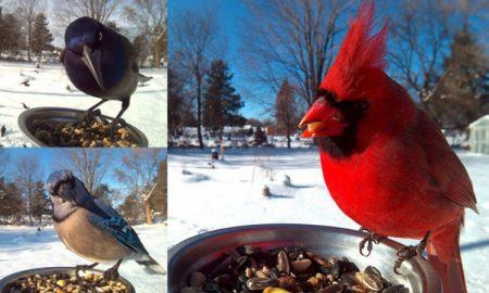 Bird photo booth header